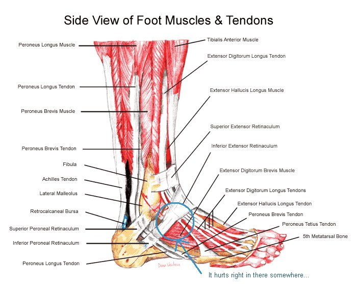 Image from Angelo Podiatry Associates